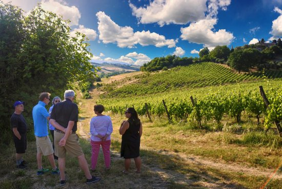 Siena, Itália: Showing our vineyard during the wine tour & tasting