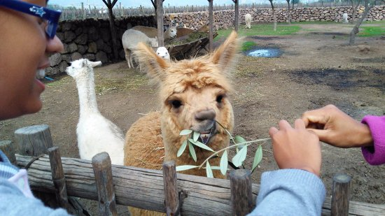 HecTour Service: Wine tasting with Alpacas!