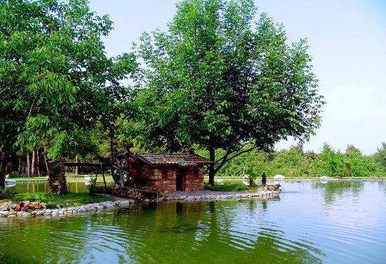 Denizli, Turcja: Çamlık Mesire Yerinde gölcük