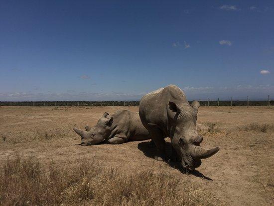 Laikipia County, Kenya: photo4.jpg
