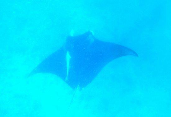 Coral Bay, Australien: 20170726_184744_large.jpg