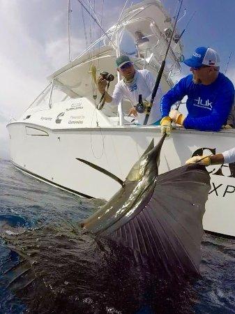 Herradura, Costa Rica: A beautiful Pacific Sailfish caught/released by our guest Matt Hall