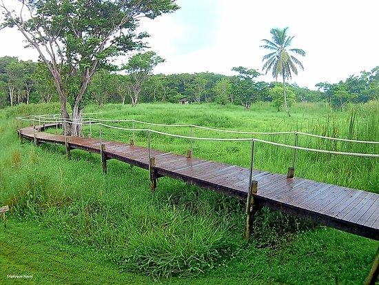 Les Abymes, Guadeloupe : Petite Promenade dans la Mangrove