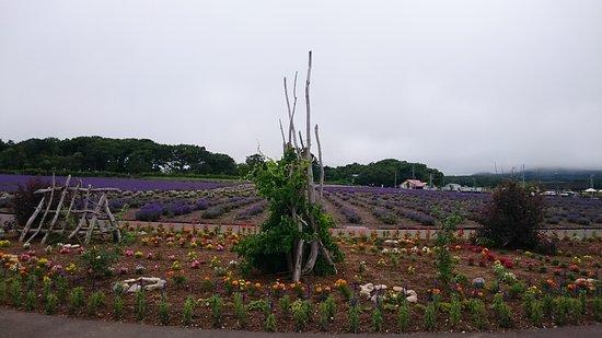 Monbetsu, Japan: DSC_3720_large.jpg