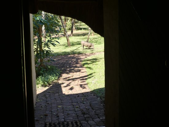 Lokuthula Lodges: photo8.jpg