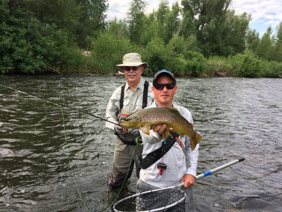 "Park City, UT: +20"" Brown trout on the Weber river, Utah"