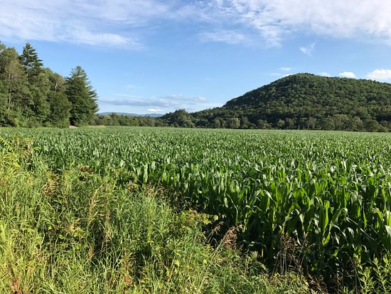 Hyde Park, VT: Some of the farmland that the rail trail takes you through.