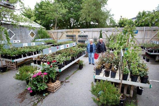 Vellinge, Σουηδία: Stort sortiment av uteväxter