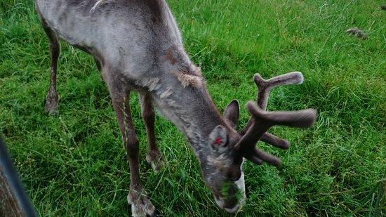 Reindeer Ranch