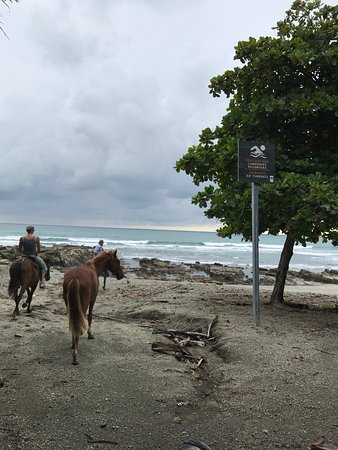 Star Mountain Horse Tours: The guide stopped on the beach for us to look around and take pictures.