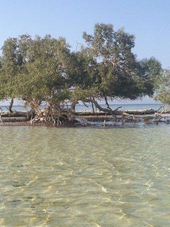 El Qulan Mangrove Forest