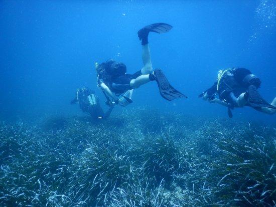 Bugibba, Malta: Underwater sightseeing