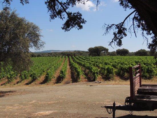 Redondo, Portugal: Vines for fine wines!