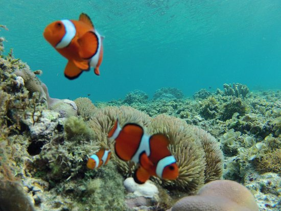 Balicasag Island, Philippines: Looking for Nemo?