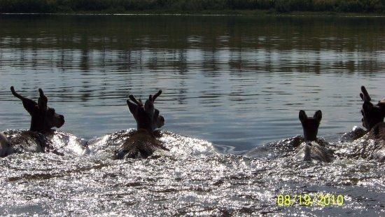 Bilde fra Sakha (Yakutia) Republic