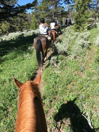 Gallatin Gateway, MT: Horseback riding