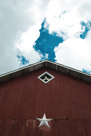 Penn Yan, NY: just an interesting shoot of the barn
