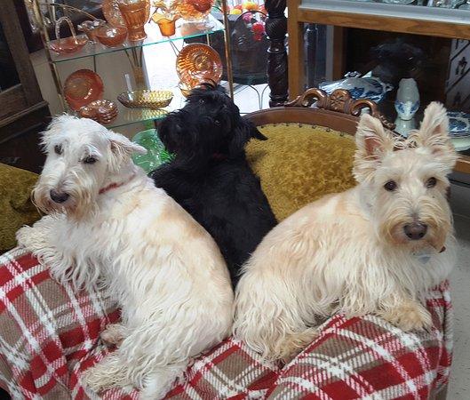 Hays, KS: Meet The Scottie Sisters, Heather May,  Bella Rae & Bonnie Belle.