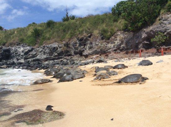 Paia, HI: Het beschermde hoekje met de zeeschilpadden...