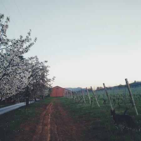 Vigolo Marchese, Azienda Agricola Pusterla, azienda vitivinicola piacentina.
