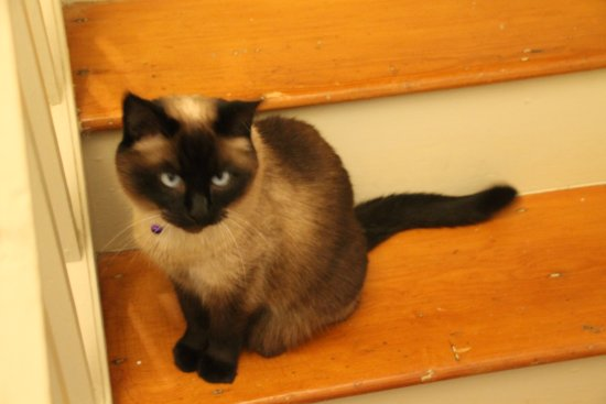 Englishman's Bed and Breakfast: Kathy & Peter's kitty ~ Sealie