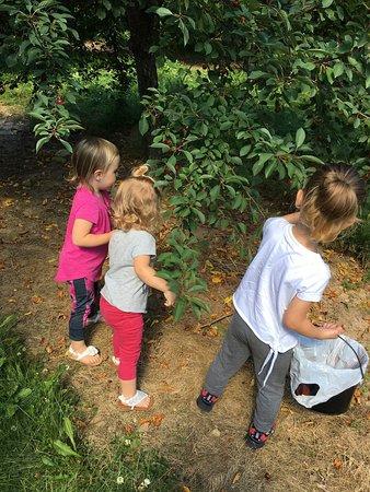 Egg Harbor, WI: Cherry picking fun!