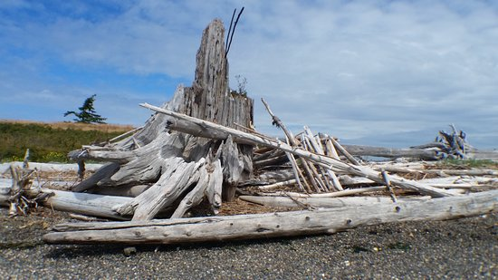La Conner, WA: Driftwood on the shoreline