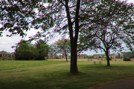 St. Catharines, Kanada: Nice trees