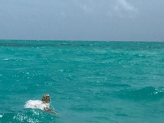 Yucatan, México: Una tortuga salió a saludarnos !
