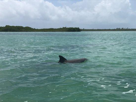 Yucatan, México: Uno de los delfines que nos acompañó en nuestro trayecto !