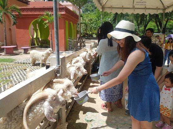 Cha-am, Tailandia: ให้อาหารสัตว์