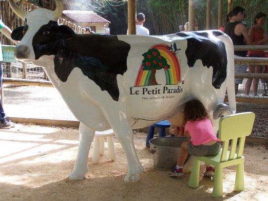 Petit Paradis de Vendargues: nouveauté de l'été : on traie la vache comme à la ferme !!