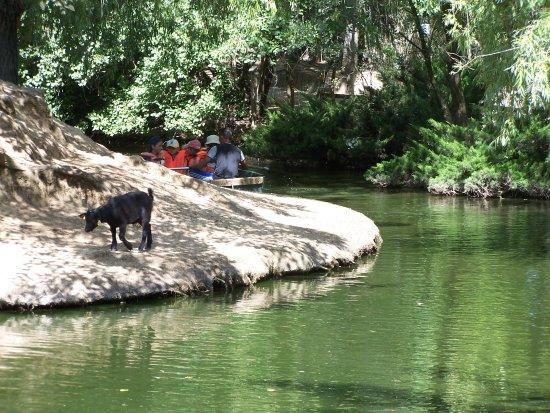 Petit Paradis de Vendargues: balade en barque