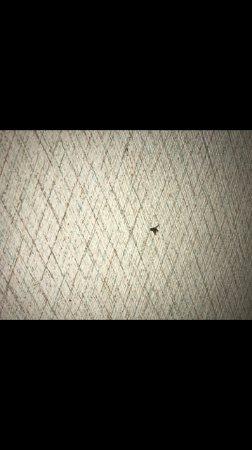 Tides Motel: Dead fly