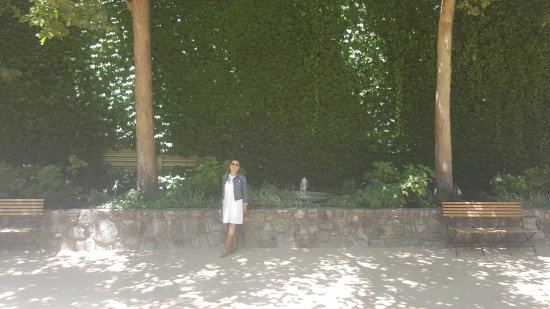 Rutherford, Καλιφόρνια: Beautiful wall of greenery