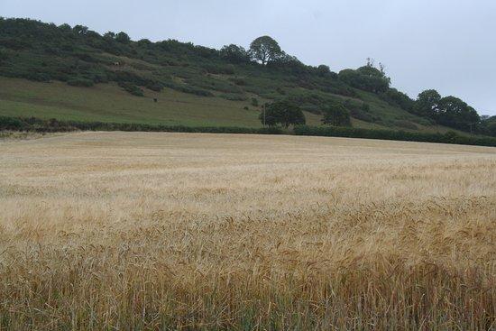 Stoke Gabriel, UK: Lovely countryside in the lane