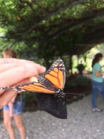 High Point, Kuzey Carolina: monarch