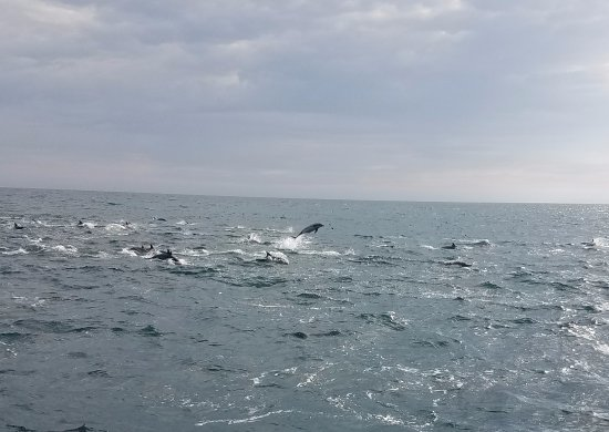 Dana Point, CA: zoom in to see a lot more out by the jumping dolphin!