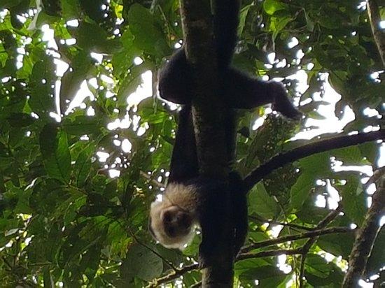 Carate, Costa Rica: 20170724_160704_large.jpg