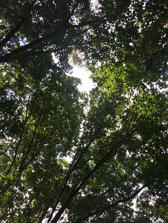 Huntersville, Karolina Północna: Beautiful trees provide ample shade. 1/3 mi trail is wide and well maintained. View of the lake