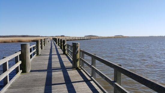 Boardwalk at DEEP Marine, Old Lyme