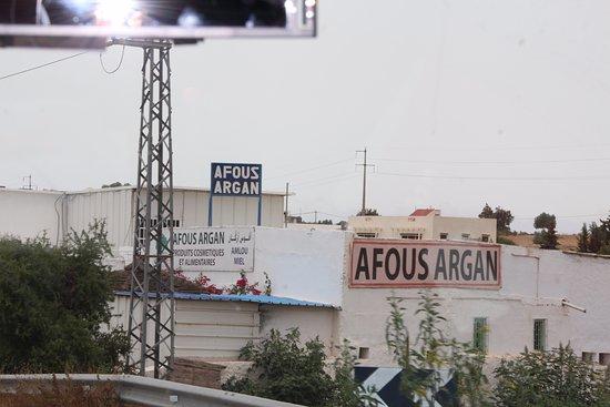 Afous Argan