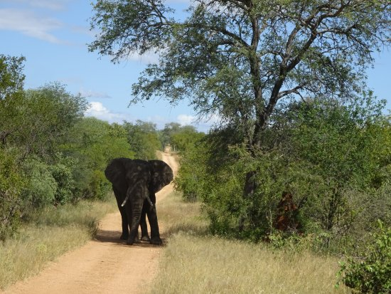 Foto de Askari Wilderness Conservation Programme
