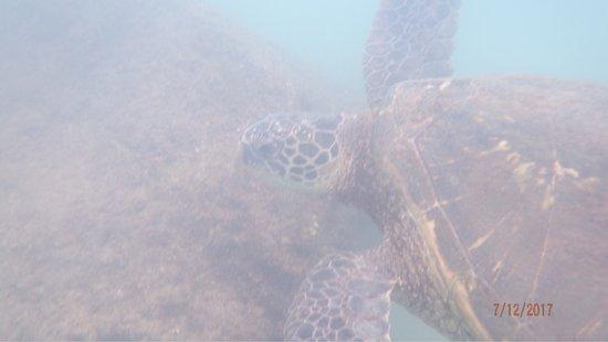Kapalua, هاواي: photo1.jpg