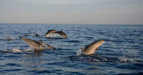Lovina Taxi: Dolphins tour
