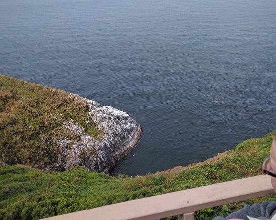 Sea Lion Caves : This beautiful overlook on top of the bluff shows the mouth of the main entryway to the caves.