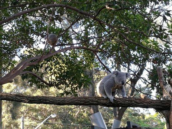 Mosman, Australia: IMG_20170720_144613_large.jpg