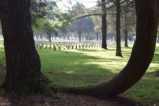 Imagen de Murfreesboro