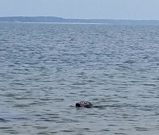 Wellfleet, MA: One of the seals we saw at Jeremy Point.