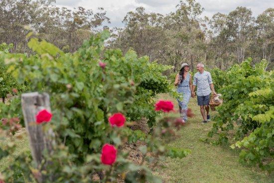 Spicers Vineyards Estate : Vineyard